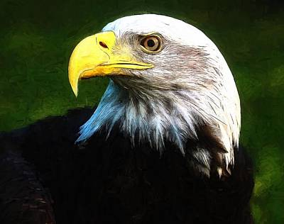 Painting - Bald Eagle Face by Dan Sproul
