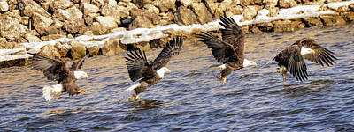 Photograph - Bald Eagle Fishing Pano by LeeAnn McLaneGoetz McLaneGoetzStudioLLCcom