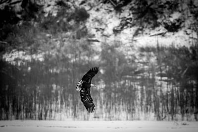 Photograph - Bald Eagle Flare by Jeff Phillippi