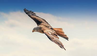 Animal Photograph - Bald Eagle Flying - Birds Photography Wall Art by Wall Art Prints