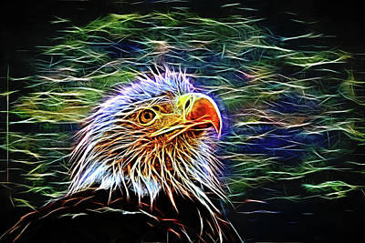 Photograph - Bald Eagle Fractal by Judy Vincent