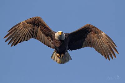 Photograph - Bald Eagle Hunt by Beth Sargent