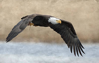 Photograph - Bald Eagle In Flight by Angie Vogel