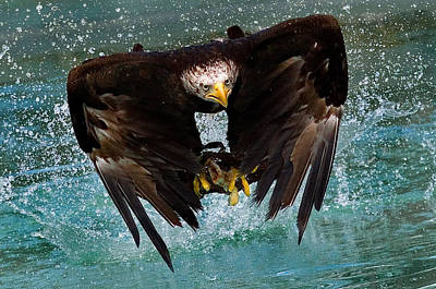 Water Splashing Photograph - Bald Eagle In Flight by Dean Bertoncelj