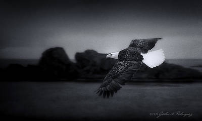 Eagle Photograph - Bald Eagle In Flight by John A Rodriguez