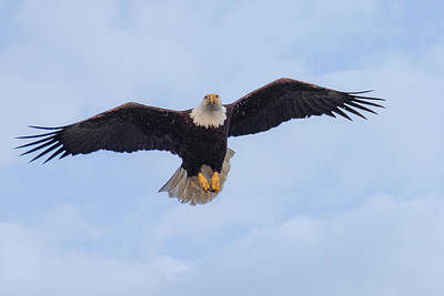 Photograph - Bald Eagle In Flight by Keith Boone