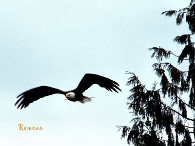 Photograph - Bald Eagle In Flight by Sadie Reneau