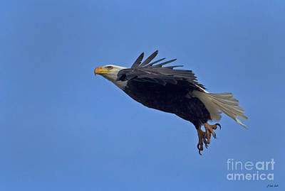 Photograph - Bald Eagle In Flight-signed-#2555 by J L Woody Wooden