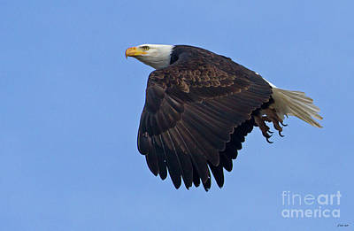 Photograph - Bald Eagle In Flight-signed-#2556 by J L Woody Wooden