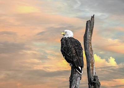 Photograph - Bald Eagle Inspiration by Patrick Wolf
