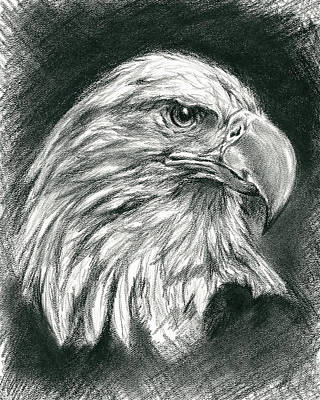 Drawing - Bald Eagle Intensity by MM Anderson