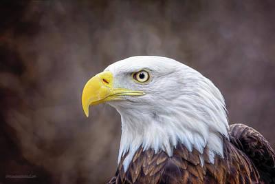 Photograph - Bald Eagle by LeeAnn McLaneGoetz McLaneGoetzStudioLLCcom