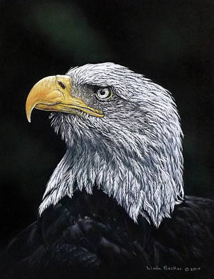 Pastel - Bald Eagle by Linda Becker