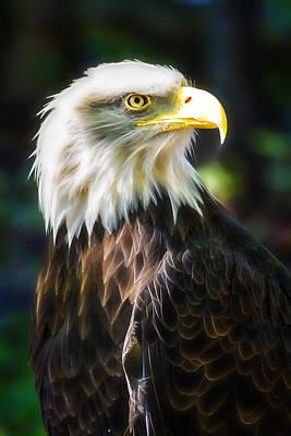 Photograph - Bald Eagle by Linda Tiepelman