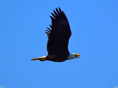 Photograph - Bald Eagle by Lisa Wooten