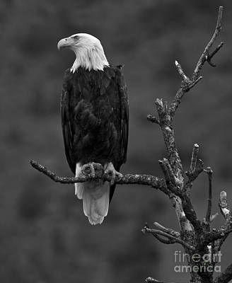 Photograph - Bald Eagle Lookout - Black And White by Adam Jewell