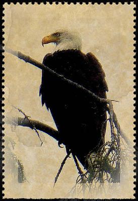 Art Print featuring the photograph Bald Eagle by Lori Seaman