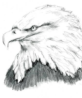 Drawing - Bald Eagle by Marilyn Barton