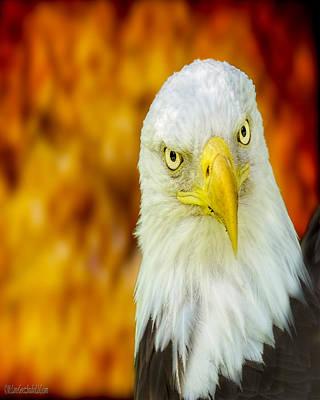 Photograph - Bald Eagle Nature Wear by LeeAnn McLaneGoetz McLaneGoetzStudioLLCcom