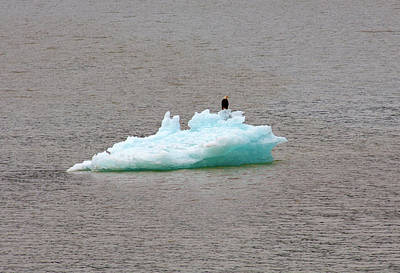 Photograph - Bald Eagle On Blue Glacial Ice by Anthony Jones