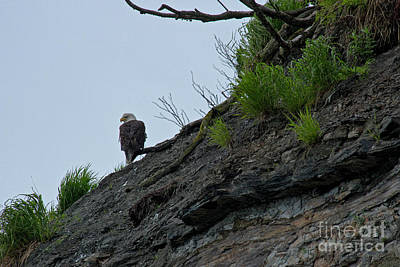 Photograph - Bald Eagle On Bluff by David Arment