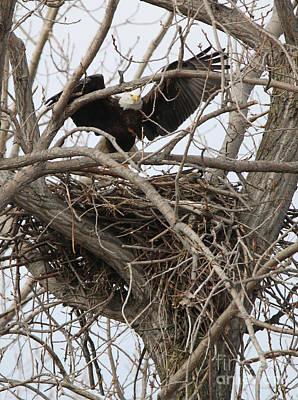 Western Art - Bald Eagle on Nest  2576 by Jack Schultz