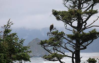 Photograph - Bald Eagle On Oregon Coast - 2 by Christy Pooschke