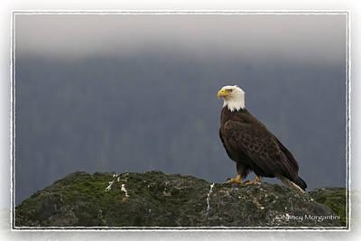 Photograph - Bald Eagle On Rock by Nancy Morgantini