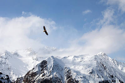 Photograph - Bald Eagle Over Mountains by Michele Cornelius