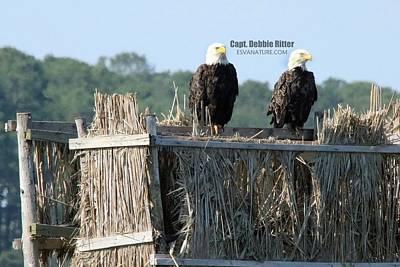 Photograph - Bald Eagle Pair 7299 by Captain Debbie Ritter