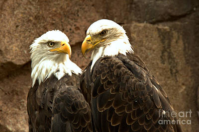 Photograph - Bald Eagle Pair by Adam Jewell