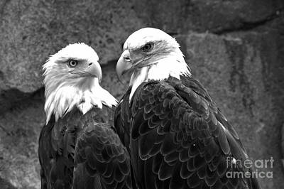 Photograph - Bald Eagle Pair Black And White by Adam Jewell