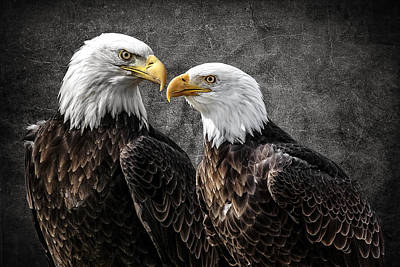 Photograph - Bald Eagle Pair by Wes and Dotty Weber