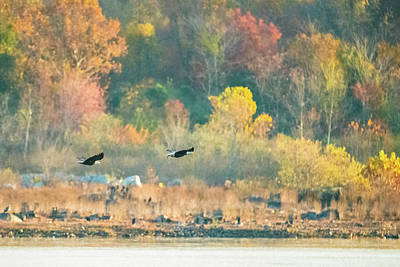 Photograph - Bald Eagle Pair With Fish And Foliage by Jeff at JSJ Photography