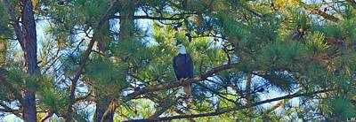 Photograph - Bald Eagle Panorama by Lisa Wooten