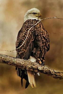 Digital Art - Bald Eagle Perch by TnBackroadsPhotos