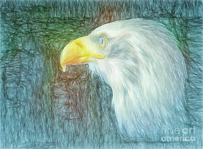 Photograph - Bald Eagle Portrait by Jutta Maria Pusl