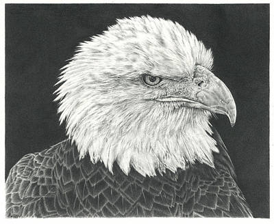 Animals Drawings - Bald Eagle by Casey