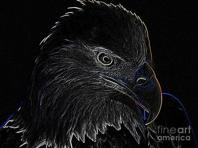 Bald Eagle Scratch Board Art Print Original by Anthony Allen