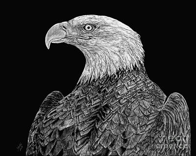 Drawing - Bald Eagle Scratchboard by Shevin Childers