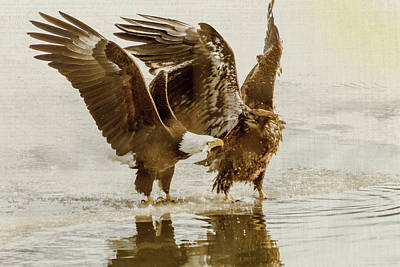 Photograph - Bald Eagle Series #10 Leave Me Alone by Patti Deters