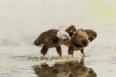 Photograph - Bald Eagle Series #15 Don't Do That Again by Patti Deters