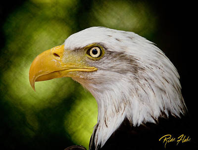 Photograph - Bald Eagle - Side View by Rikk Flohr