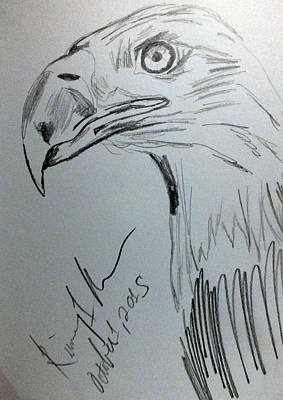 Drawing - Bald Eagle Sketch by Kimmary MacLean