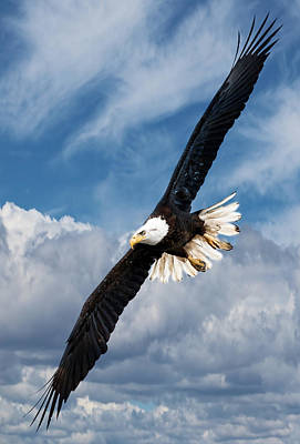 Photograph - Bald Eagle Soaring Thru The Skies by Athena Mckinzie