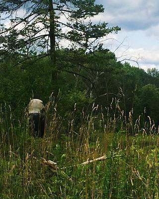Photograph - Bald Eagle Standing Guard by Ellen Levinson