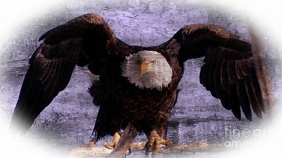Mixed Media - Bald Eagle Taking Flight by Rod Jellison