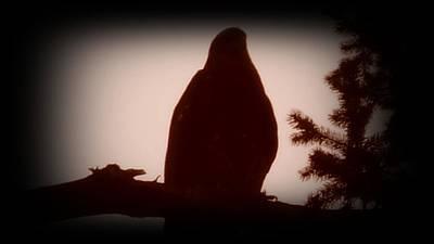Washingotn Photograph - Bald Eagle Twilight by Dawna Raven Sky