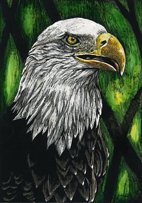 Drawing - Bald Eagle by William Underwood