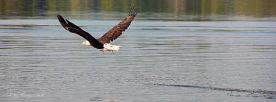Dan Beauvais Royalty-Free and Rights-Managed Images - Bald Eagle with Catch 3192 by Dan Beauvais